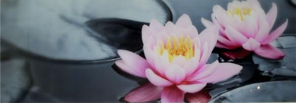 WOW Auswahl Glasbild 95x33cm Wandbild Bild Echtglasbild Wasserrose 11219
