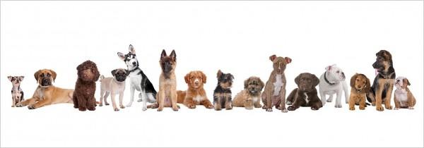 "Glasbild ""Hundefamilie"" 33x95cm, Wandbild Glaswandbild Hunde 11199"