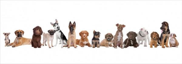 WOW Auswahl Glasbild 95x33cm Wandbild Bild Echtglasbild Hundefamilie 11199
